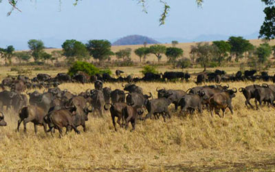 kidepo national park safaris, kidepo national park tour, africas best national park, kidepo valley national park safaris
