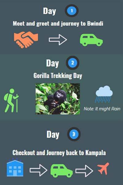 3 days gorilla trekking bwindi, 3 days itinerary uganda, gorilla safaris, gorilla tours, 3 days gorilla tracking bwindi, 3 days gorilla trekking uganda