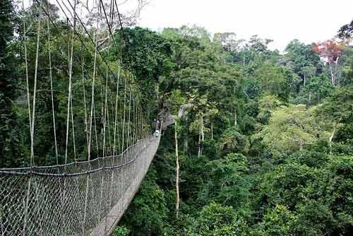 7 days rwanda safari, 7 days in rwanda, 7 day rwanda, 7 days rwanda gorillas, 7 days rwanda wildlife, Nyungwe canopy