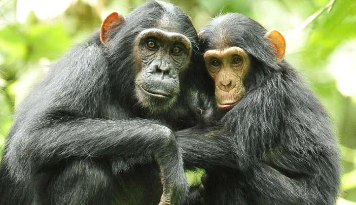 Image result for Kibale Forest National Park (3 days)