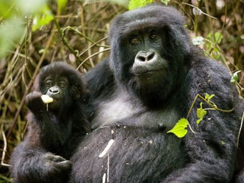 10 day itinerary uganda, water rafting tour uganda, chimpanzee trekking, chimpanzee tracking, wildlife tours uganda, wildlife safaris uganda, gorilla tours uganda, gorilla safaris, 10 day uganda safari