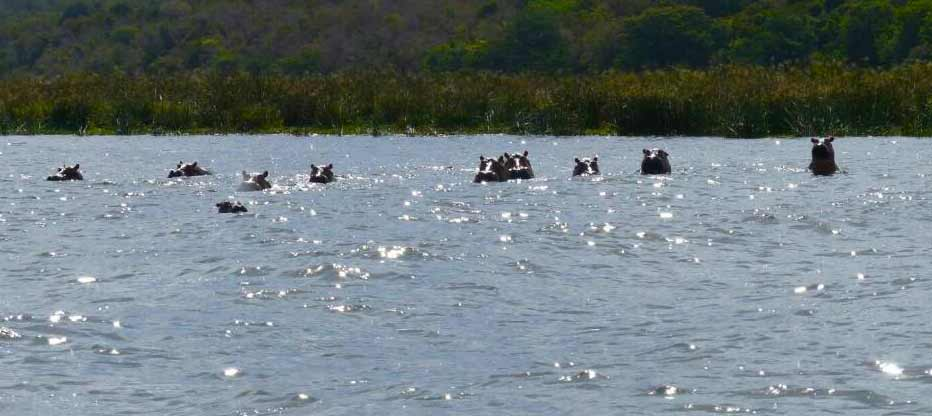 boat ride on lake mburo, lake mburo tour, Uganda Zebra, lake mburo national park, uganda gorilla safari, gorilla trekking uganda, gorilla trekking mgahinga national park, golden monkey habituation