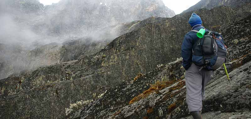 rwenzori vegetation, groundsel, rwenzori mountains climbing, rwenzori mountaineering services, mountain rwenzori climbing, rwenzori mountains trekking, rwenzori mountains hiking, mt rwenzori trekking, mt rwenzori climbing, mt rwenzori hiking, mt rwenzori trekking tour, rwenzori mountains climbing tours, rwenzori mountains trekking tours, rwenzori mountains hiking tours, rwenzori mountains climbing safaris
