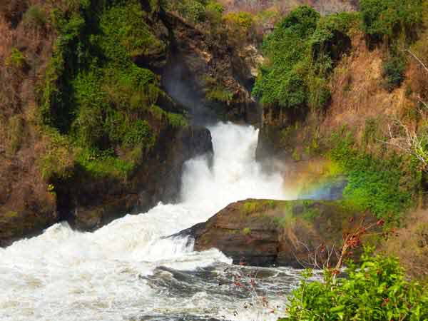 3 days murchison falls safari, big five animals, big five safari, murchison falls national park