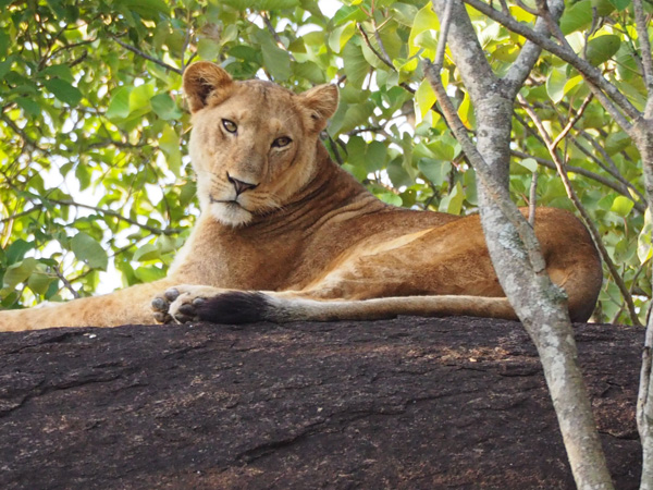 8 days uganda safari, kidepo national park tour, kidepo national park safari, uganda safari tour, uganda tour, uganda safari, kidepo valley national park tour, kidepo national park animals, kidepo national park activities
