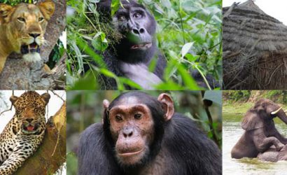 24 days uganda, 24 days uganda safari, 24 days uganda tour, uganda long tours, uganda group tours, uganda gorilla tours